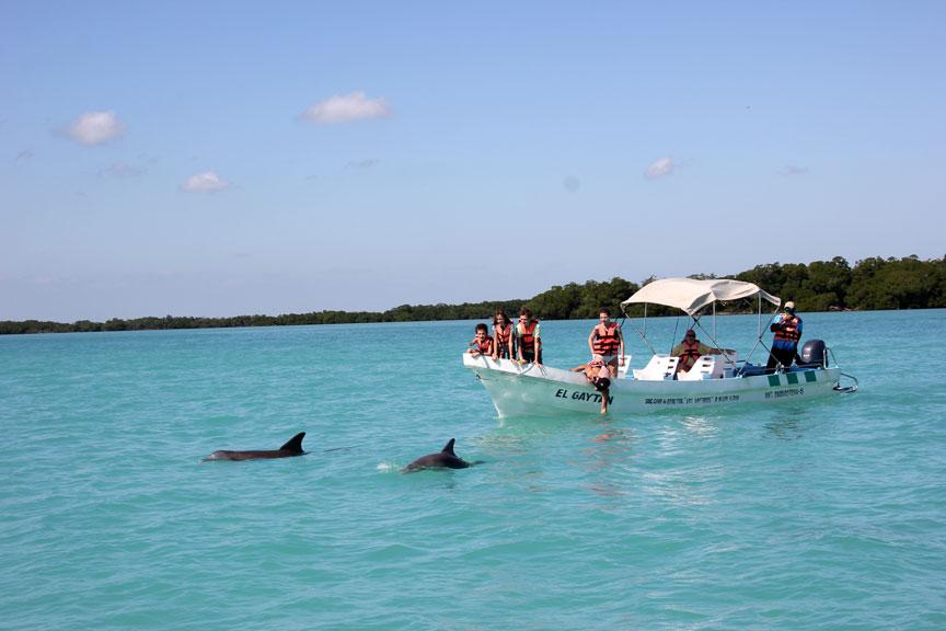 Punta-Allen-delfines