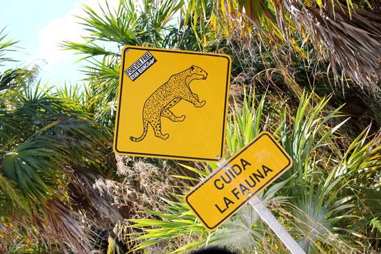 Punta-Allen-jaguar
