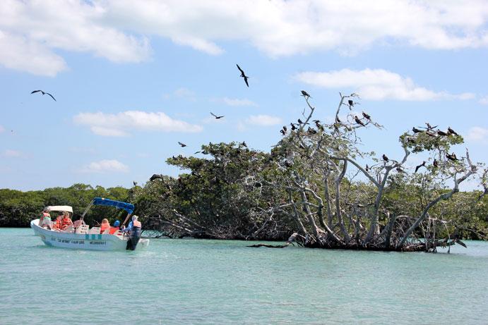 Punta-Allen-pajaros