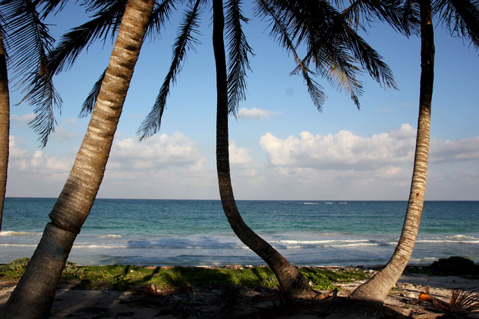 Punta-Allen-palmeras