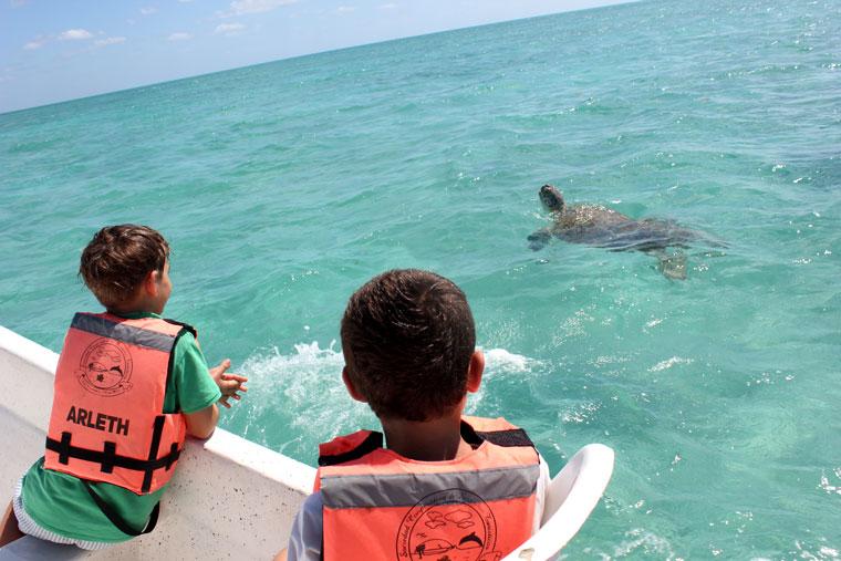 Punta-Allen-tortuga