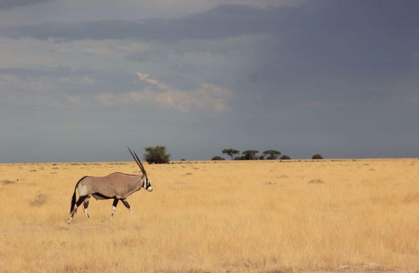 ¿Cómo visitar el Parque Nacional de Etosha?