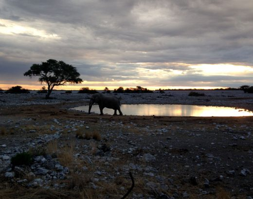 elefante-waterhole-etosha