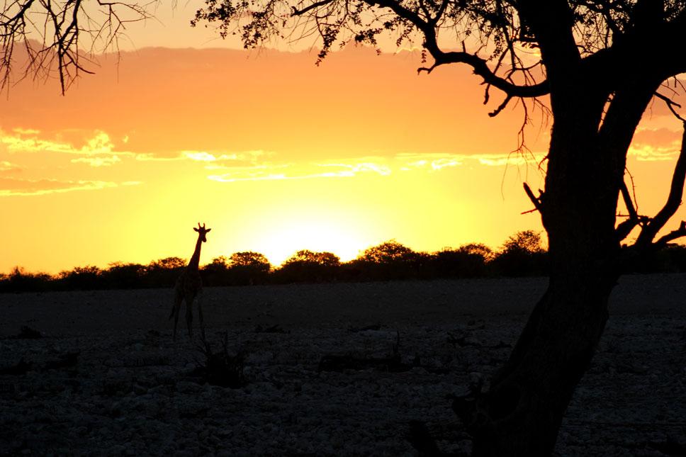 etosha-atardecer-namibia