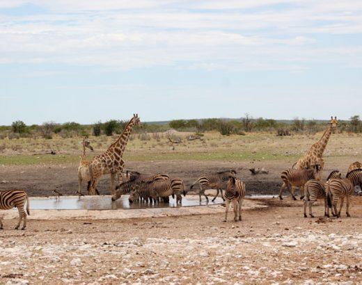 etosha-namibia-waterhole