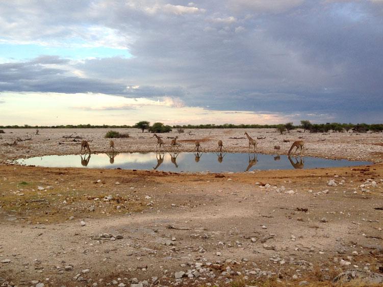 jirafas-waterhole-etosha