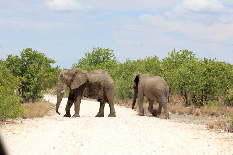 namibia-safari-etosha-elefantes