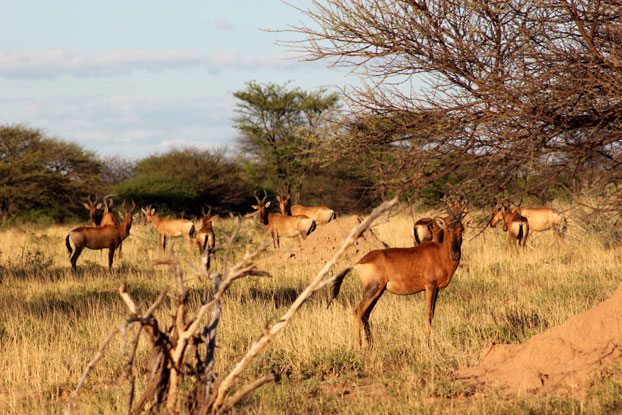reserva-otjiwa-namibia-alcefalos