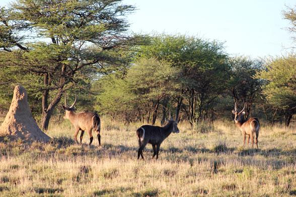 reserva-otjiwa-namibia-kobos