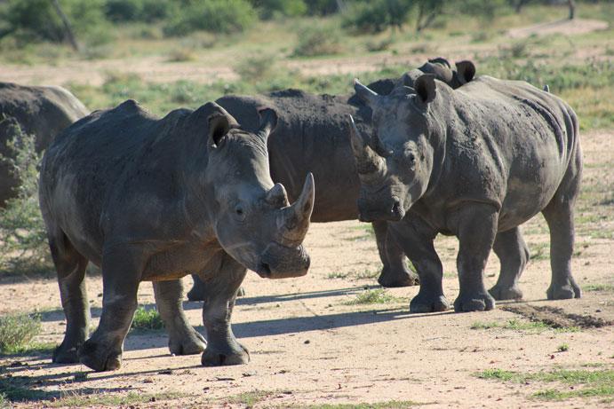 reserva-otjiwa-namibia-rinocerontes