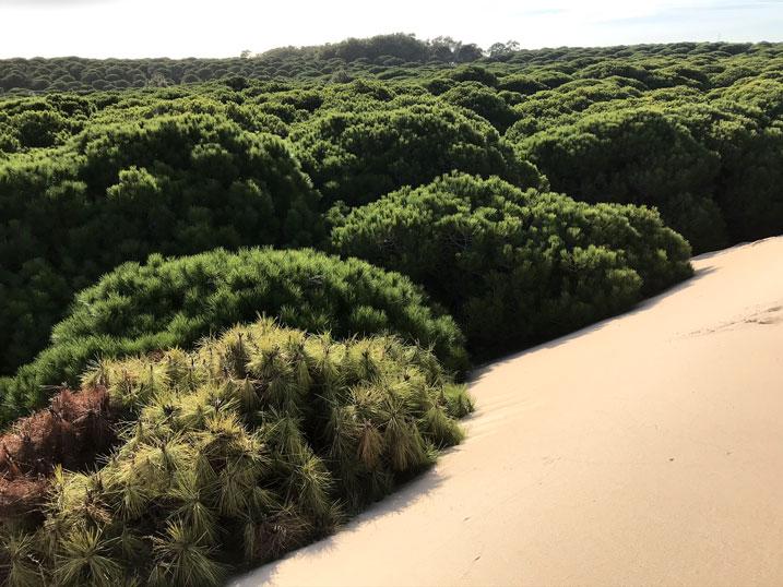 playa-bolonia-duna-pinar
