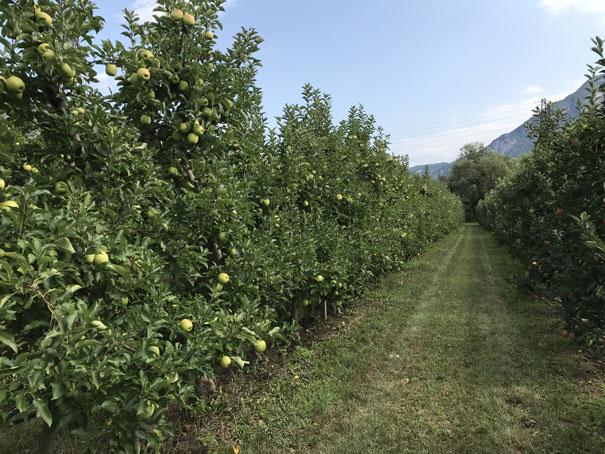 lago-di-garda-manzanos