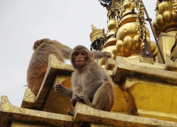 katmandu-templo-de-los-monos-nepal