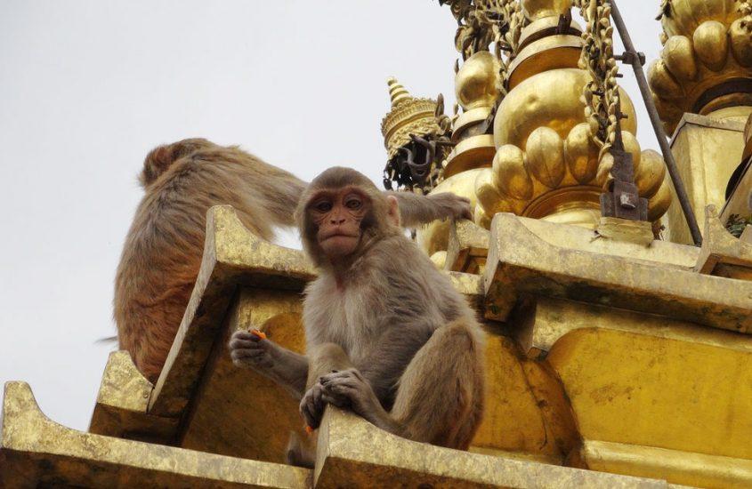 Visita del Templo de los monos en Katmandú