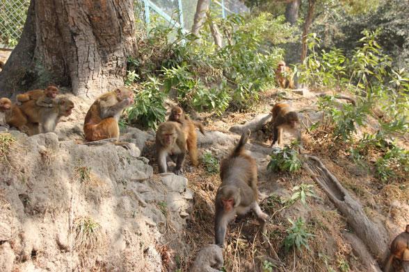 pashupatinath-monos