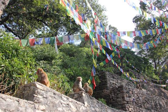 templo-de-los-monos-katmandu
